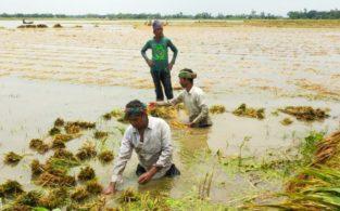 করোনায় কৃষকের ক্ষতি প্রায় ৫৬ হাজার ৫৩৬ কোটি টাকা: ব্র্যাক