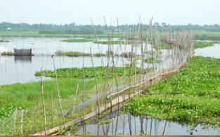 বাঞ্ছারামপুরে বিলে অবৈধ বাঁধে তিনশ হেক্টর জমি অনাবাদী, বিপাকে কৃষকরা (ভিডিও)